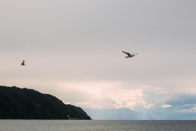 Seagull blue skye Photo Premium
