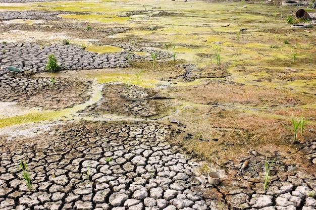 Séchage de terrains en friche sales avec une surface fissurée en raison du réchauffement climatique Photo Premium