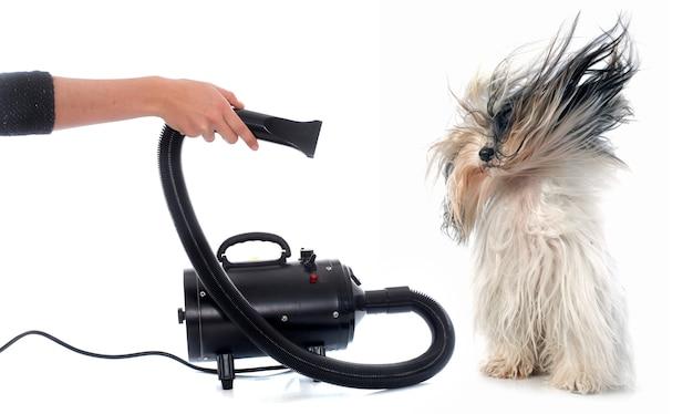Sèche cheveux pour chien Photo Premium