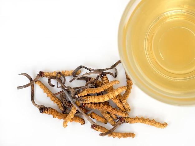 Sélectionnez le foyer de champignons cordyceps cela une herbes. Photo Premium