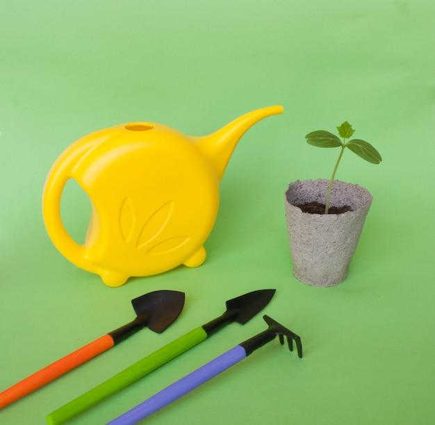 Semis de concombre avec outils de jardin Photo Premium
