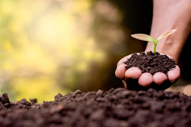 Les semis dans les mains des femmes. Photo Premium