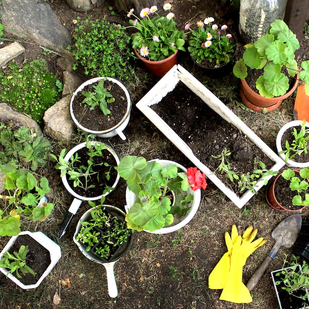 Semis de jardin printanier en pot de fleurs Photo Premium