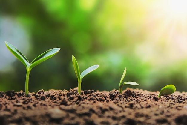 Semis de plantes étape de plus en plus dans le jardin Photo Premium
