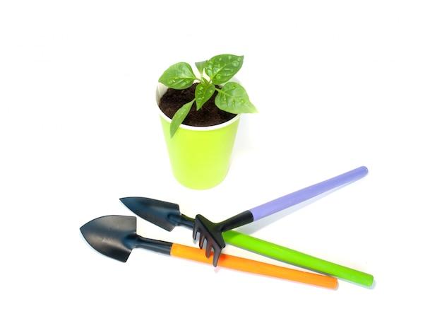 Semis de poivre avec outils de jardin Photo Premium