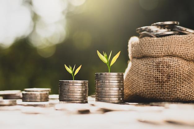 Les semis poussent sur des pièces empilées sur un sol fertile. Photo Premium