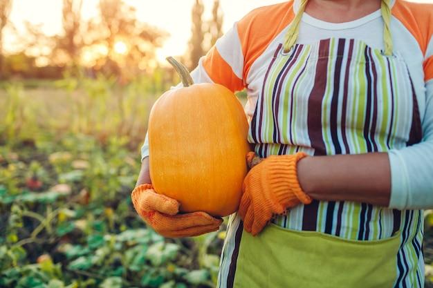 Senior femme agriculteur cueillette récolte d'automne de citrouilles à la ferme Photo Premium