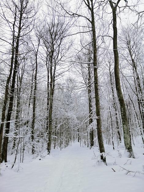 Sentier Dans Une Forêt Entourée D'arbres Couverts De Neige à Larvik En Norvège Photo gratuit