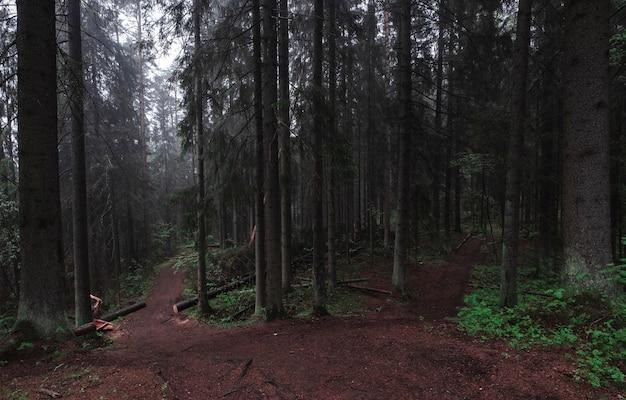 Sentier Dans La Forêt Sombre Brumeuse Et Mystique De La Forêt. Paysages Moody Photo Premium