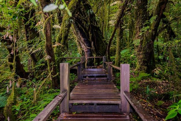 Sentier nature ang ka luang Photo Premium