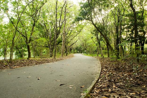Sentier pédestre / à vélo / à pied courant dans la forêt en plein air, dans la nature Photo Premium