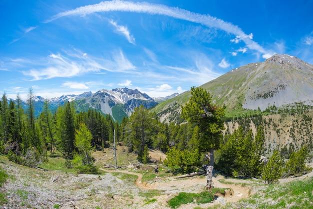 Sentier de randonnée traversant des forêts de conifères d'altitude avec une montagne enneigée. parc régional du queyras, col d'izoard, alpes françaises. Photo Premium