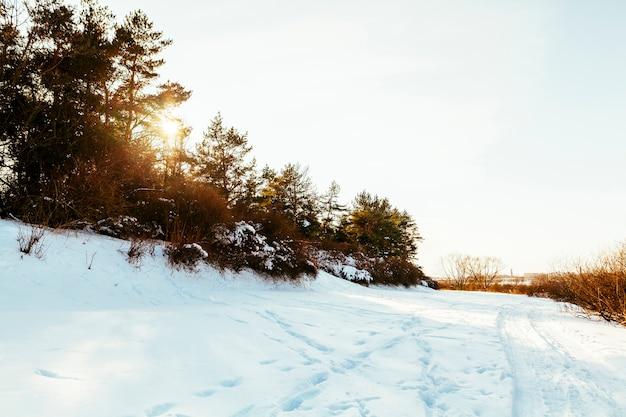 Sentier de ski sur un paysage enneigé avec des arbres Photo gratuit