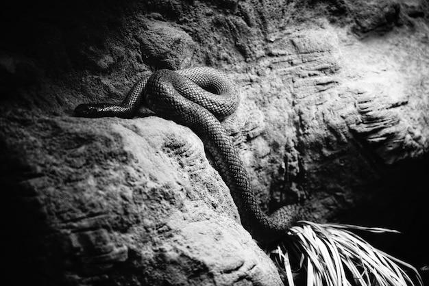 Un Serpent Dangereux Dans Sa Grotte Photo gratuit