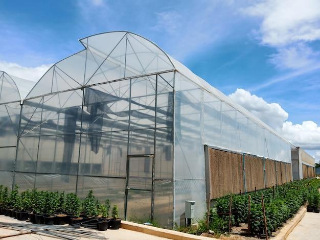Serres cultivant des légumes Photo Premium