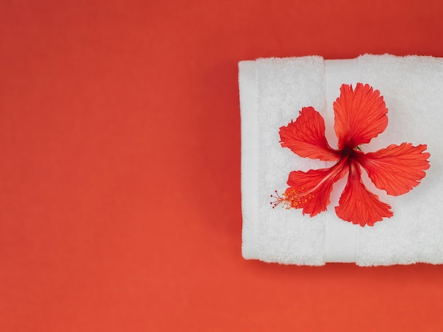 Serviette vue de dessus et fleur sur fond rouge Photo gratuit
