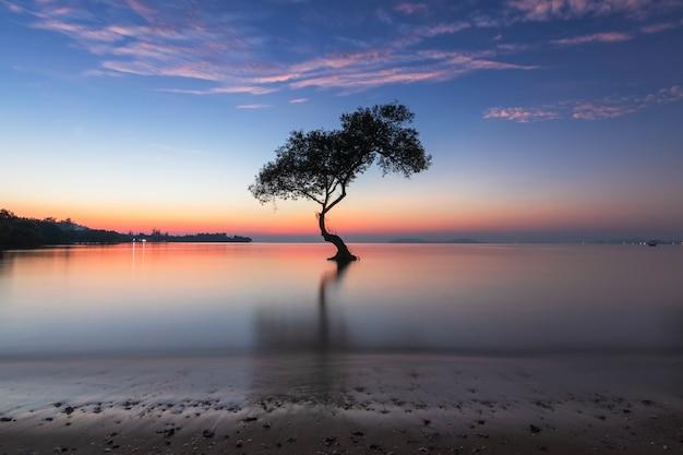 Seul arbre de mangrove et lever de soleil du matin sur la magnifique plage et le ciel de chumphon, thaïlande. Photo Premium