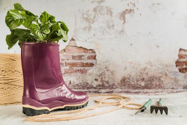 Showplant Dans La Botte En Caoutchouc Wellington Violette Avec Corde Et Outils De Jardinage Contre Un Vieux Mur Photo gratuit