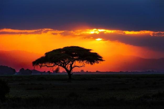 Silhouette D'arbre Africain Au Coucher Du Soleil Dans La Savane, Nature De L'afrique, Kenya Photo Premium