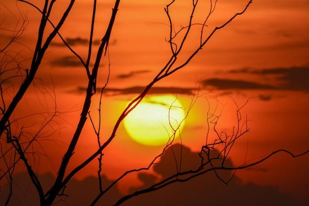 Silhouette d'une branche d'arbre avec coucher de soleil, fond d'halloween. Photo Premium