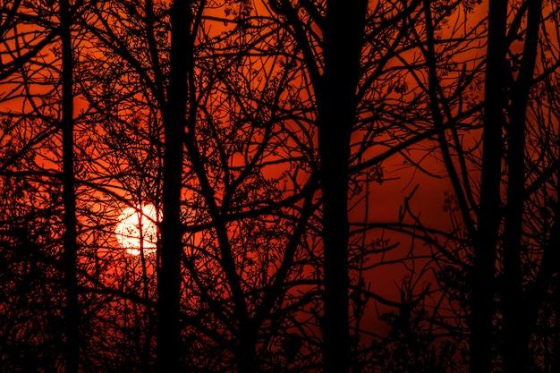 La Silhouette Des Branches Au Coucher Du Soleil Photo Premium