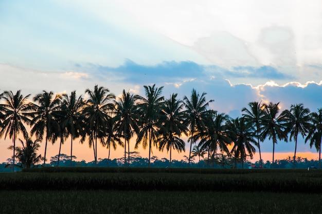 Silhouette De Cocotiers Sur Paradis Coucher De Soleil Coloré Photo Premium