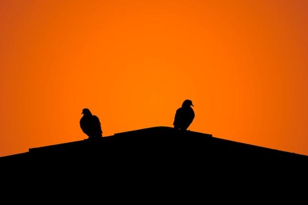 Silhouette de deux colombes sur le toit. Photo Premium