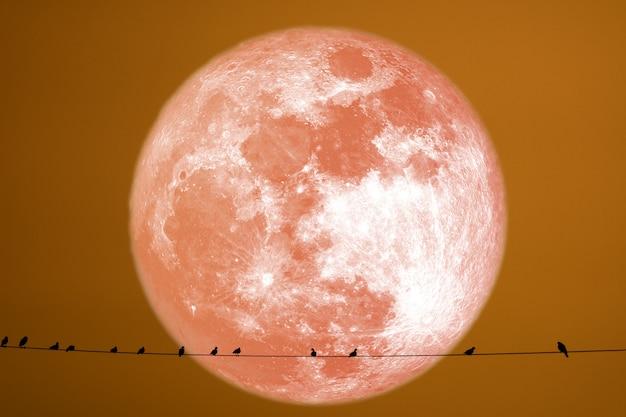Silhouette de foin lune arrière silhouette oiseaux sur la ligne électrique Photo Premium