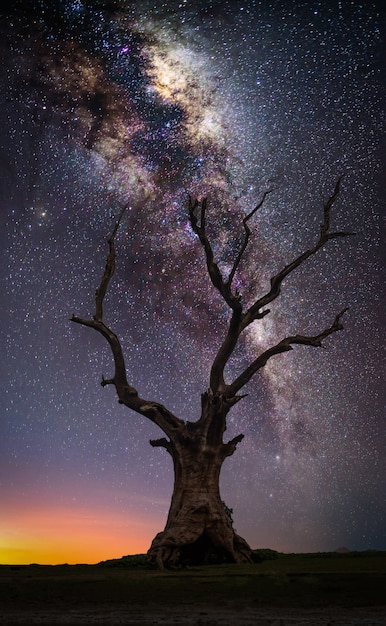 Silhouette mort grand arbre sur la colline avec la voie lactée au lever du soleil. Photo Premium