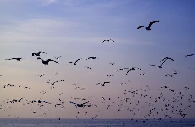 Silhouette, de, mouettes, voler, contre, pastel, bleu, ciel matin, sur, mer Photo Premium