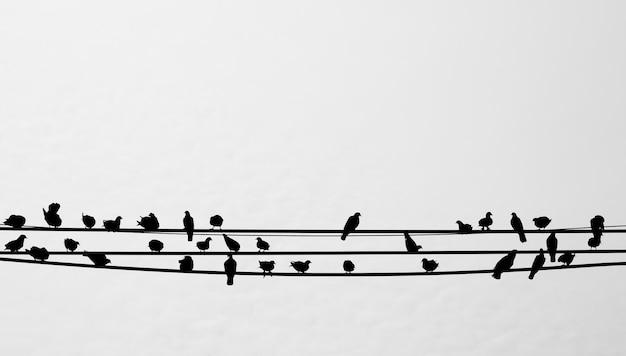 Silhouette d'oiseaux assis sur une ligne téléphonique Photo Premium