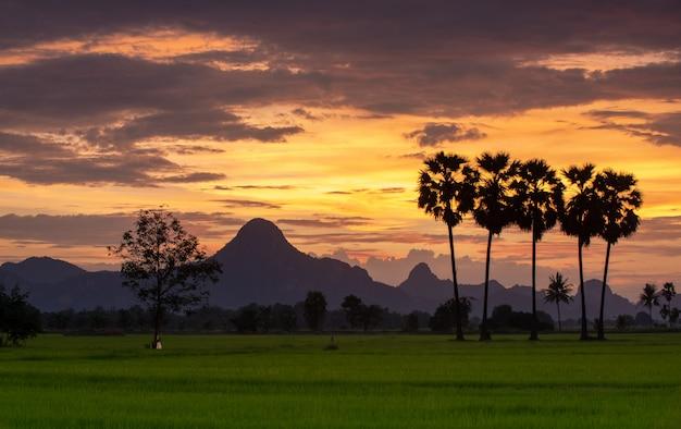 Silhouette de palmier à sucre avec éclairage du soleil Photo Premium