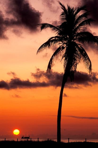Silhouette de palmier tropical avec un coucher de soleil orange en arrière-plan Photo Premium