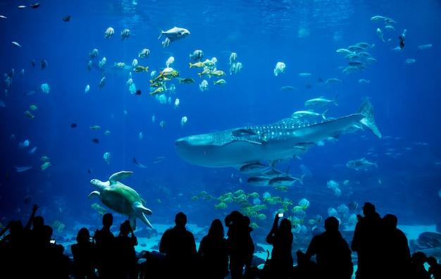 Silhouette Personnes Dans Un Grand Aquarium Photo Premium