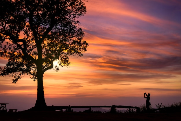 Silhouette de photographe prenant la photo sous le grand arbre au coucher du soleil Photo Premium