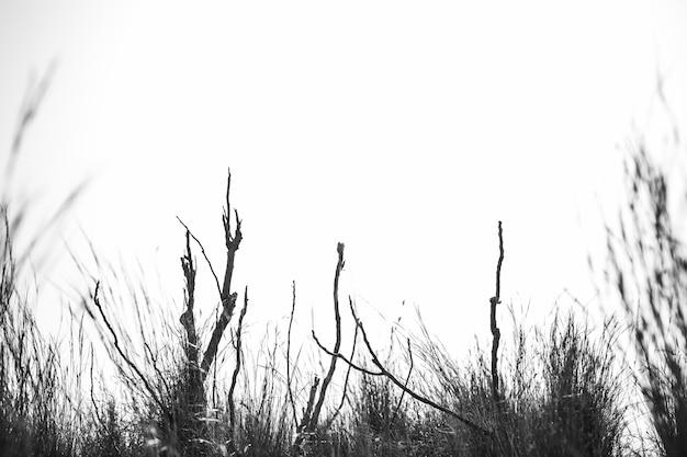 Silhouette de plante contre ciel Photo gratuit