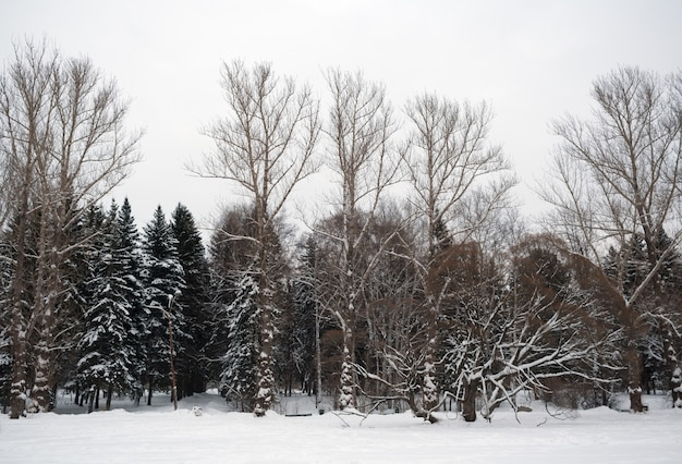 Silhouettes d'arbres nus et enneigés Photo Premium
