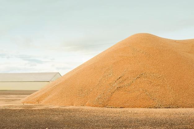 Silos de stockage de grain. récolte de céréales, blé, seigle, orge, maïs, colza Photo Premium