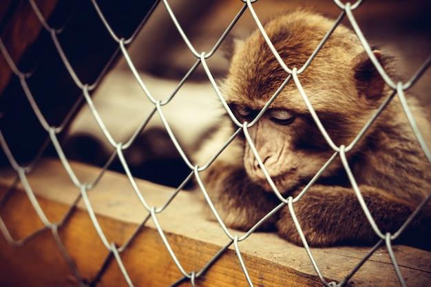 Singe assis dans la cage au zoo Photo Premium