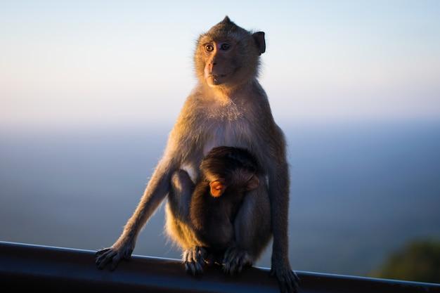 Singe maman assis sur bois Photo Premium