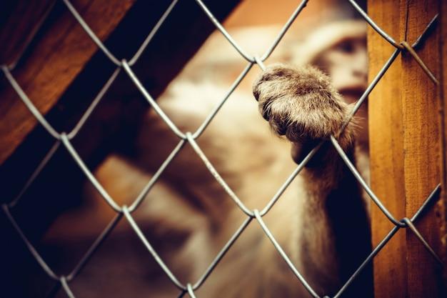 Singe solitaire assis derrière la cage au zoo Photo Premium