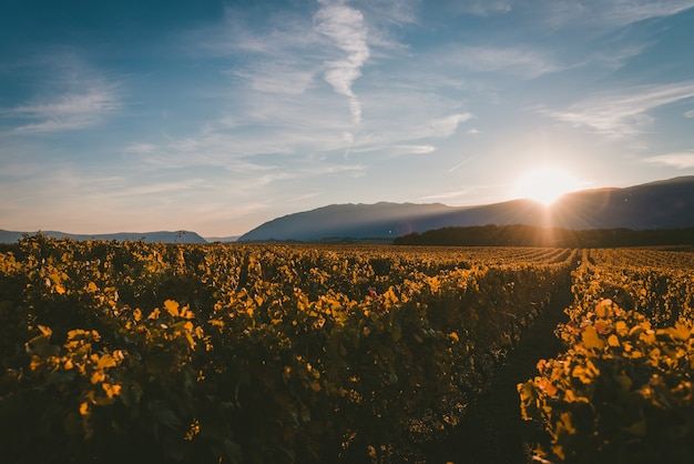 Soleil Couchant Derrière Les Montagnes Et Couvrant Le Vignoble De Lumière Photo gratuit