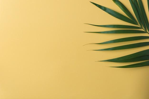 Soleil sur une feuille de palmier. Photo Premium