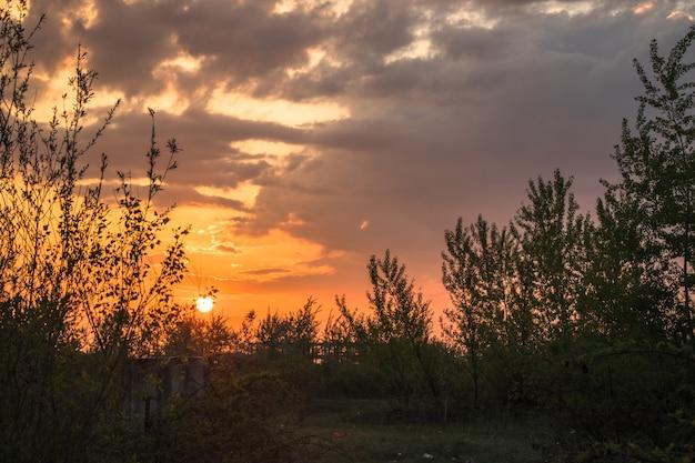 Soleil levant dans la brousse Photo Premium