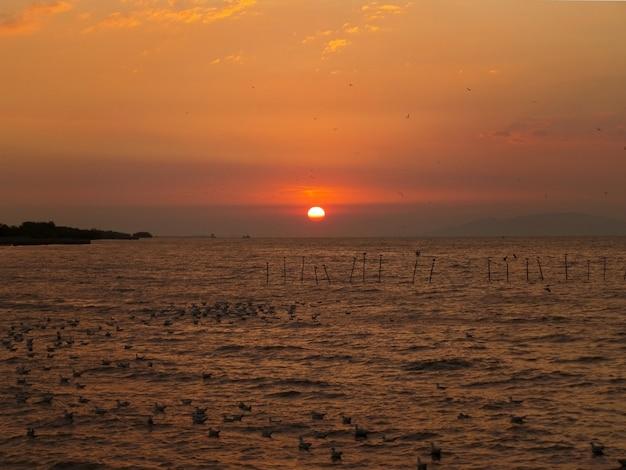Le soleil se lève sur le golfe de thaïlande avec d'innombrables mouettes Photo Premium