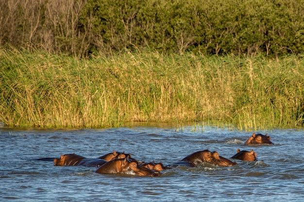 Sortant La Tête De L'eau Devant Un Champ Vert Photo gratuit