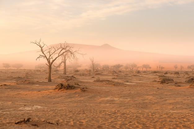 Sossusvlei, namibie. acacia et dunes de sable à la lumière du matin, brouillard et brouillard. Photo Premium