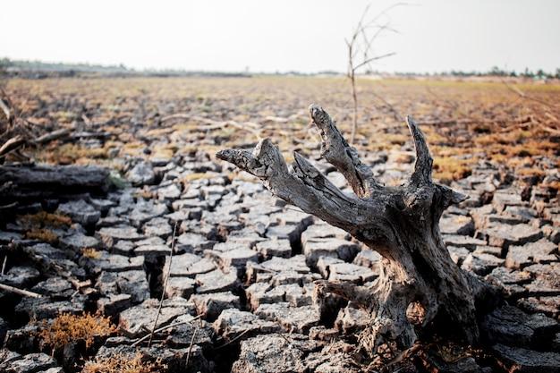 Souches sèches sur sol fissuré. Photo Premium