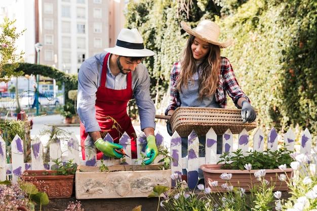 Souriante jeune jardinière femme tenant un panier en regardant son petit ami tailler la plante avec un sécateur Photo gratuit