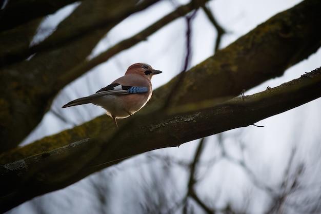 Sparrow Perché Sur Une Branche D'arbre Photo gratuit